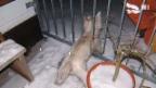Video «Teurer Feuerwehreinsatz: 14 Mann retten Hund» abspielen