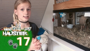Video «Luana mit ihren Mäusen» abspielen