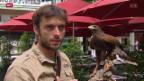 Video «Bussard auf Taubenjagd in der Stadt Genf» abspielen