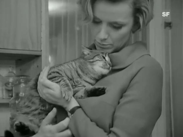 Video «Tiervermittlung» abspielen