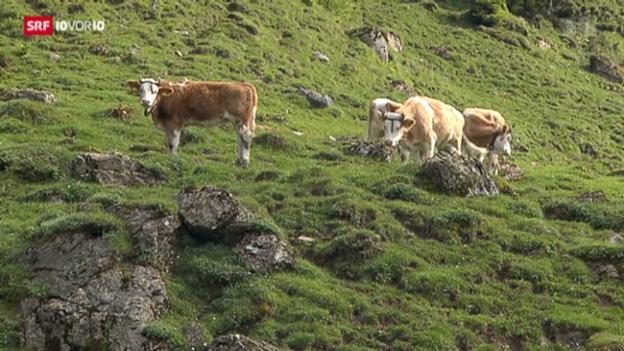 Video «Alpwirtschaft zwei Wochen im Rückstand» abspielen