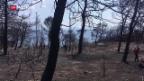 Video «Brandstiftung in Griechenland?» abspielen