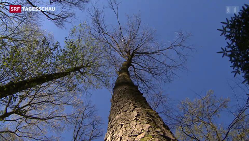 Schweizer Wald wird untersucht