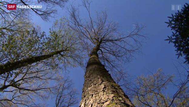 Video «Schweizer Wald wird untersucht» abspielen