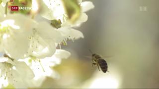 Video «EU handelt wegen Bienensterben» abspielen