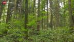 Video «Umstrittene Umnutzung von Waldzonen» abspielen