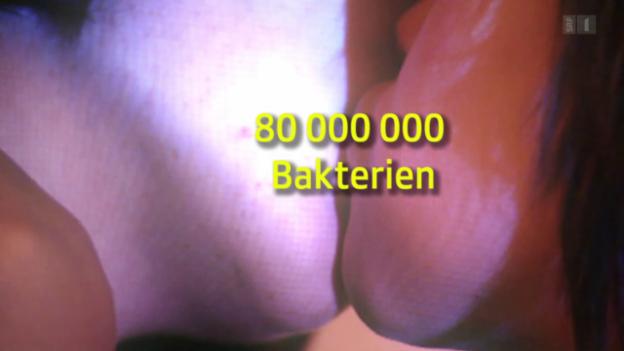 Video «Bakterientausch beim Zungenkuss» abspielen