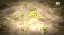 Video «Histamin-Unverträglichkeit - Wenn Essen zum Glücksspiel wird» abspielen