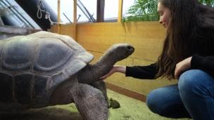 Video «Den Tieren ganz nah sein – im Zoo Zürich» abspielen