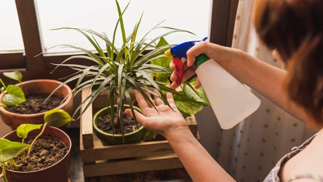 Pflanzen gegen Mücken?
