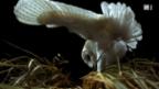 Video «Vögel» abspielen