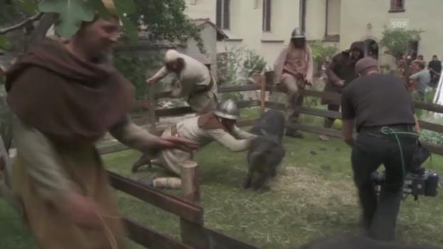 Video «Schweine fangen ist nicht einfach» abspielen