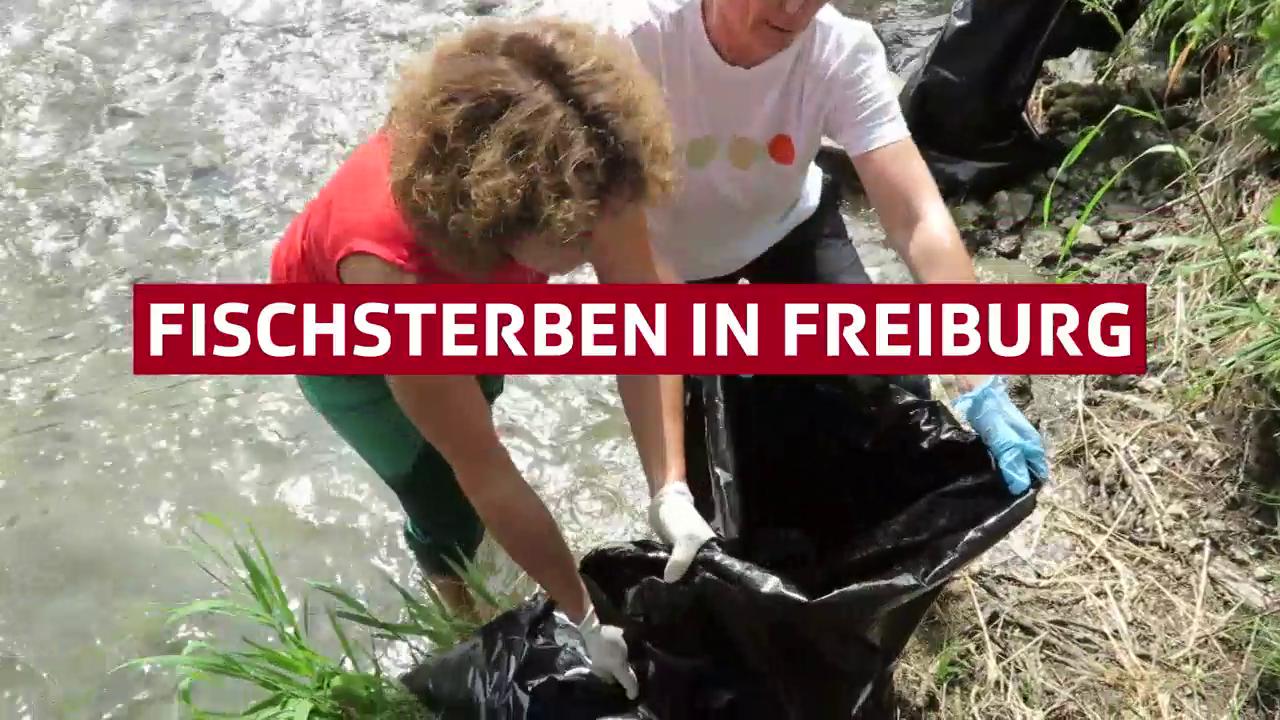 Fischsterben in Freiburg