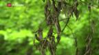 Video «Tote Bäume» abspielen