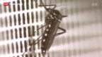 Video «Auswirkungen der Bio-Invasion auf die Schweiz» abspielen
