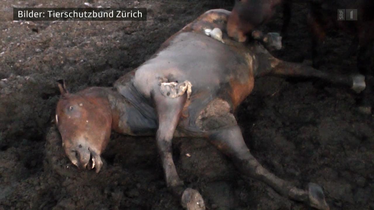 11.03.14: Pferdefleisch: Wieder Quälfleisch auf unseren Tellern
