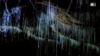 Video «Pilzmücke» abspielen