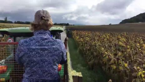 Video ««Ready, Steady, Golf!»: Queen Anic fährt auf Heuwagen durch ihr Royaume» abspielen