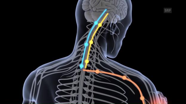 Video «Placebo-Effekt: Was passiert im Körper?» abspielen