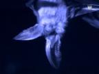 Video «Fledermäuse» abspielen