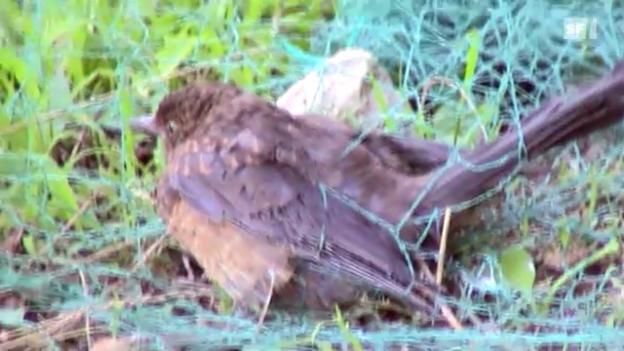 Video «Sendung vom 23. September 2010» abspielen