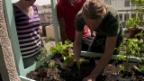Video «Grünes Paradies: Wie mit kleinem Budget Grosses wächst» abspielen