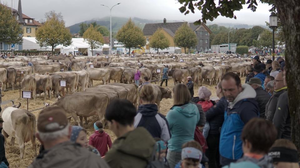 700 Kühe auf dem Appenzeller Brauereiplatz