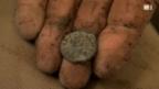 Video «Hobby-Archäologen gefährden Schweizer Kulturgüter» abspielen