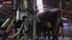 Video «Geldbonus für weniger Milch» abspielen