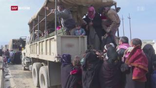 Video «Kampf um Mossul in entscheidender Phase» abspielen