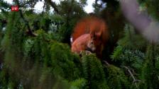 Link öffnet eine Lightbox. Video Unsere Wälder: Ein Jahr unter Bäumen (2/3) abspielen