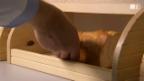 Video «Welcher Brotkasten wirklich frisch hält» abspielen