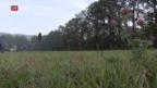 Video «Studie wegen Nitratproblemen» abspielen