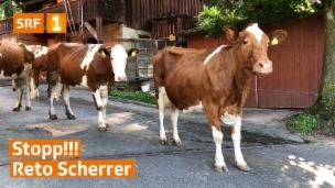 Video «Stopp Reto Scherrer!» abspielen