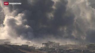 Video «Peschmerga-Kämpfer erobern irakische Stadt Sindschar zurück» abspielen