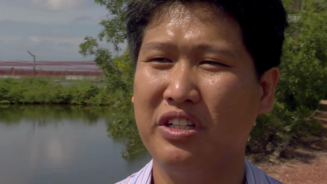 Auf der Bio-Garnelenfarm (Filmausschnitt)