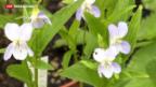 Video «Bedrohte heimische Pflanzenwelt» abspielen
