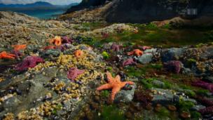 Link öffnet eine Lightbox. Video Unser blauer Planet – Die Küsten (6/7) abspielen.