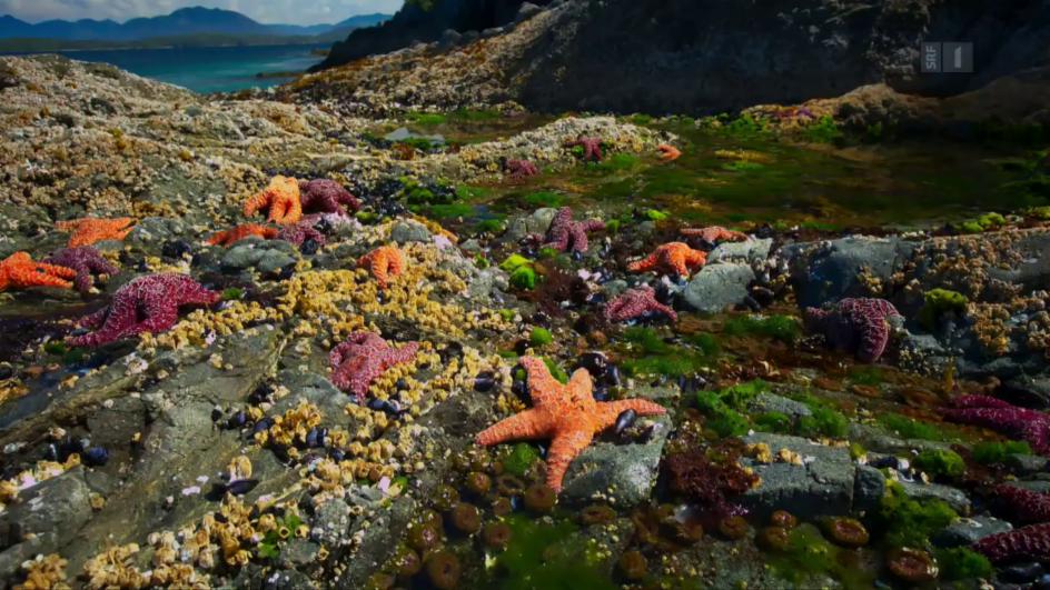 Video «Unser blauer Planet – Die Küsten (6/7)» abspielen