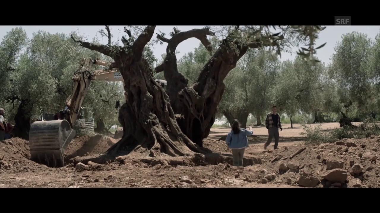 Trailer zu «El Olivo»