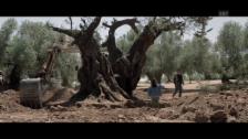Video «Trailer zu «El Olivo»» abspielen