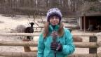 Video «Traumberuf Tierpflegerin» abspielen