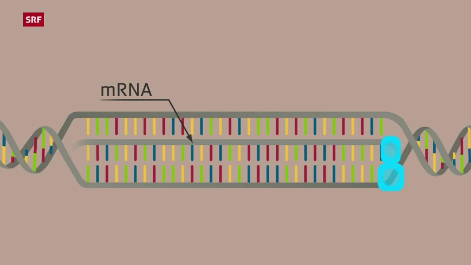 So funktioniert mRNA