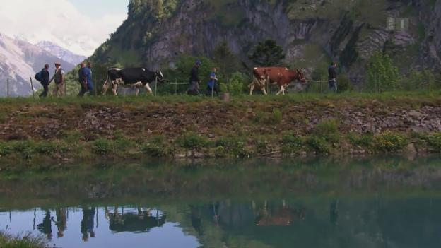 Video «Ab auf die Alp!» abspielen