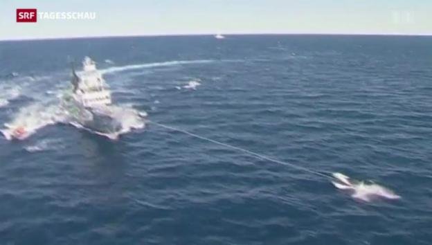 Video «UNO-Gericht verbietet Japan den Walfang» abspielen