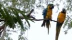 Video «Karin Keller-Sutter im Zoo» abspielen