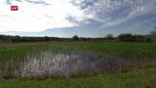 Video «Mückenplage im Zürcher Weinland» abspielen