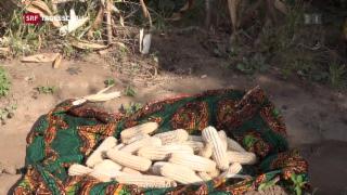 Video «Lagerung von Lebensmitteln in Tansania» abspielen