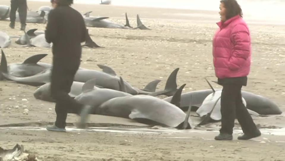 Delfine in Japan gestrandet
