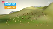 Video «Direktzahlungen der Alp Malbun» abspielen
